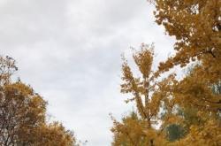 """""""秋老虎""""终于偃旗息鼓 今天开始一直到本周末都将维持相对凉爽的气温"""