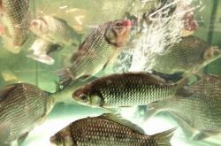 今年以来南京全市农业农村部门持续加大力度开展禁渔执法行动